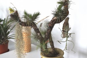 Exhibition of orchids, tillandsias and carnivorous plants